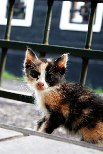 Baby Cat 2