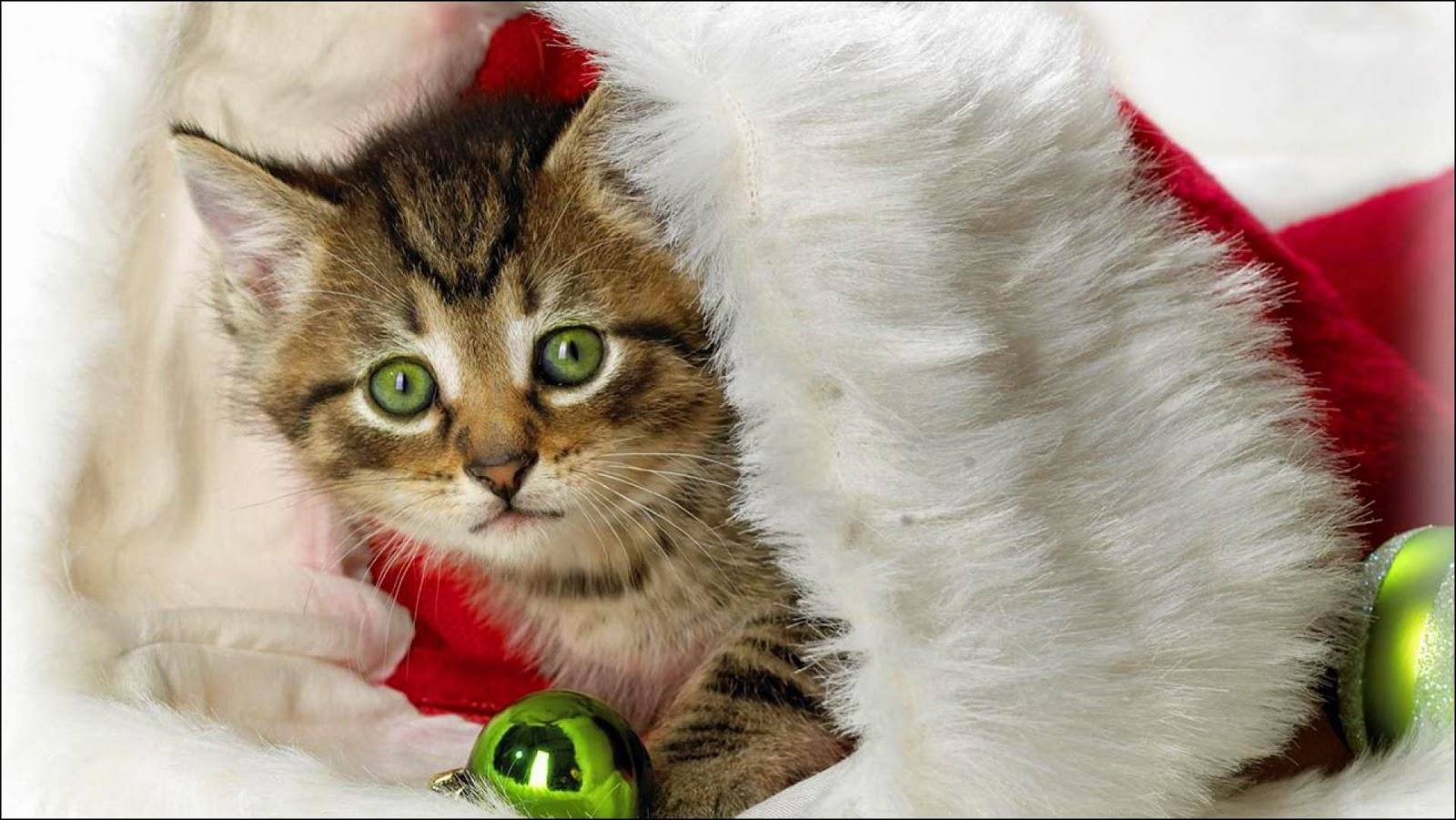 Precioso gato dentro de gorro navideño