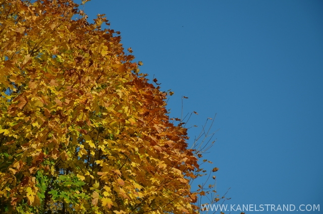 autumn tree against the sky
