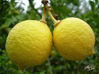 Do lemons prevent cancer?