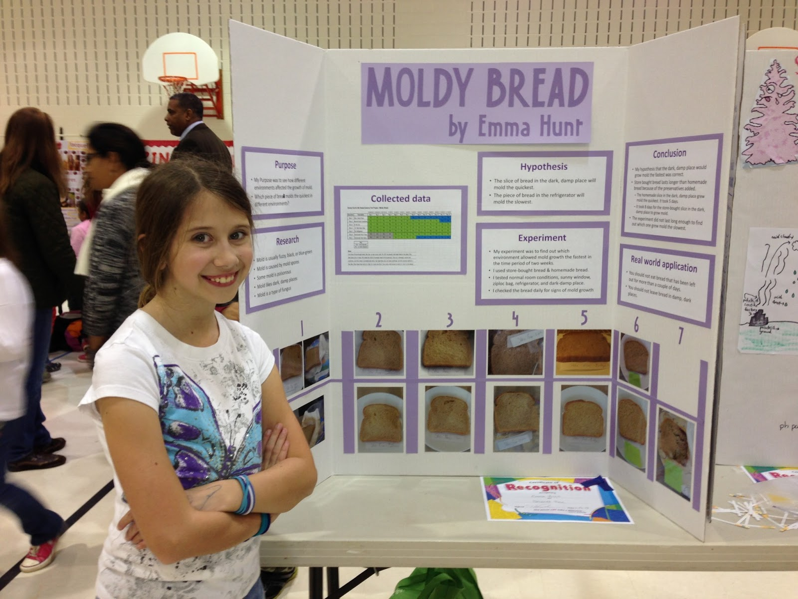 "bread mold science project For this science project, you set out to answer the question, ""which food will mold grow on faster: bread, milk, bananas or cheese"" while completing the project, you will discover how quickly certain foods spoil and grow mold when you do not properly store them, such as placing them in a refrigerator."