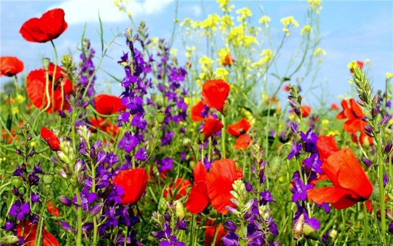 Bienvenidos al nuevo foro de apoyo a Noe #320 / 17.05.16 ~ 01.06.16 Flores+silvestres+(10)