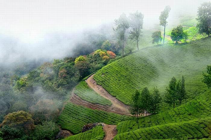 Top Tourist Spot: Munnar
