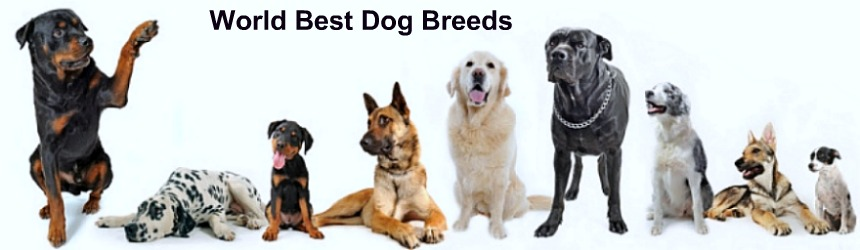 World Best Dog Breeds