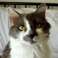 Meemo the Cat