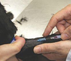 extraccion sangre en perros
