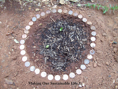 Organic Pest Control, shared by Making Our Sustainable Life