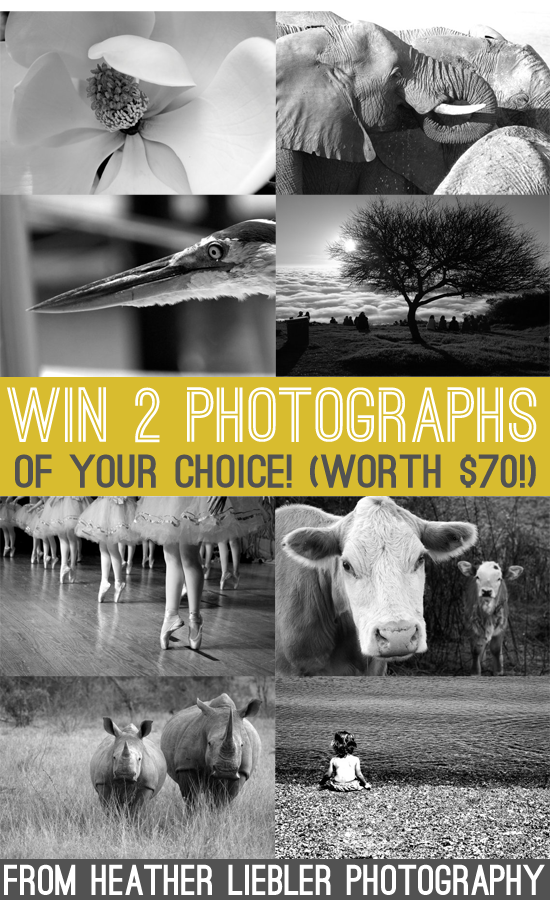 win two photographs worth $70!