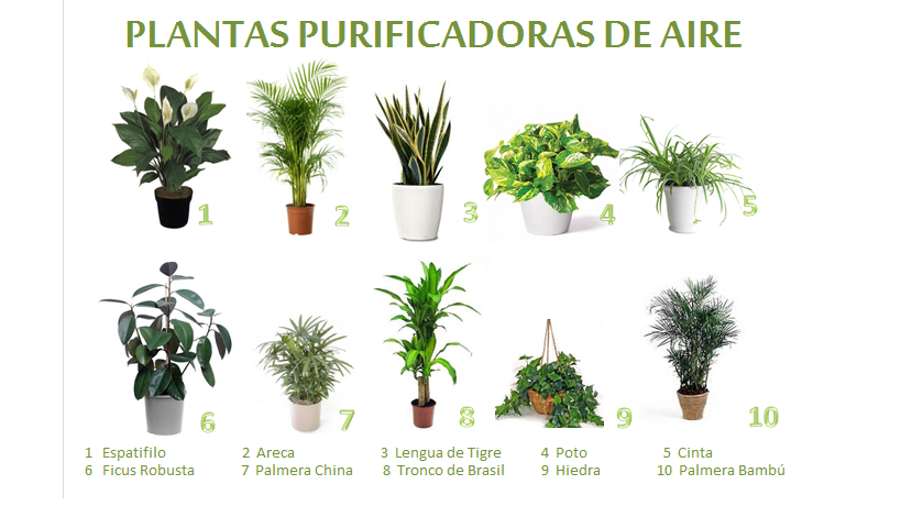 Una casa sana plantas purificadoras 1 espatifilo for 5 plantas decorativas