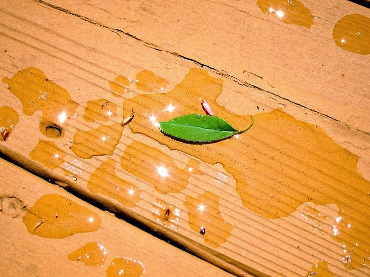 a single leaf in rain's remains