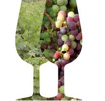 Les Estacions a la Vinya