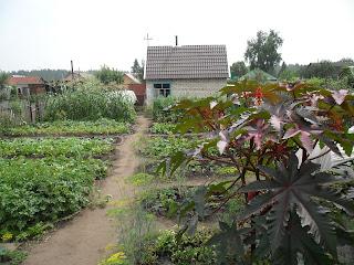 Vkusniogorod - Начало августа на даче – мой участок