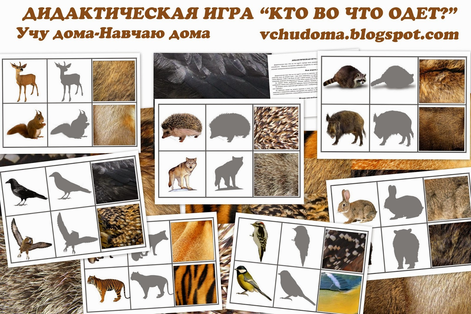 Английский язык животные раскраски