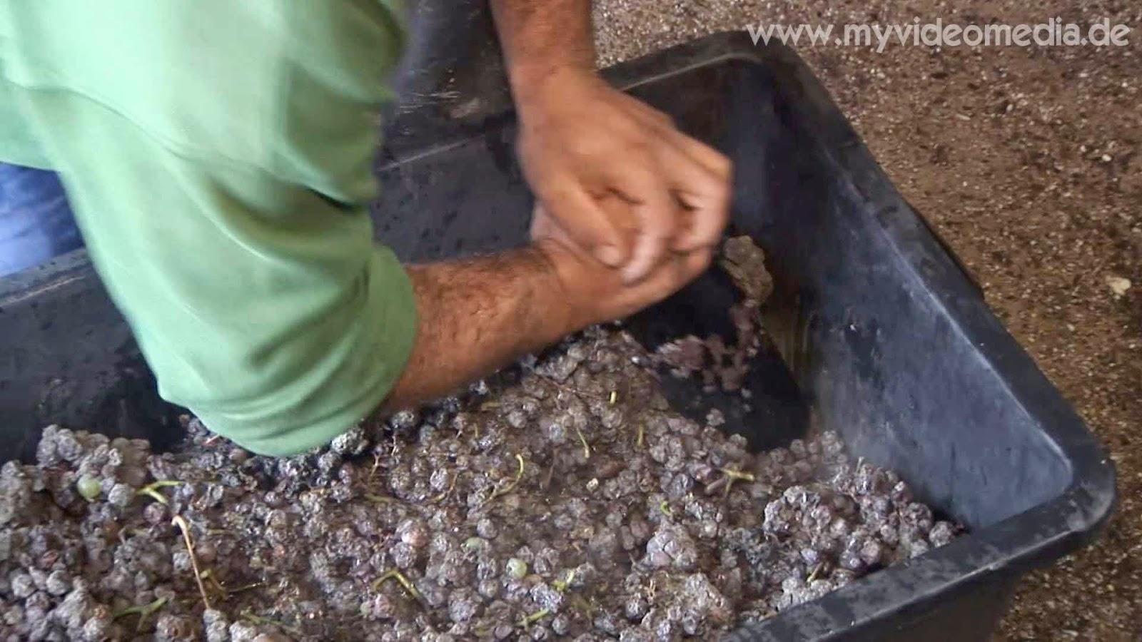 mashing the grapes