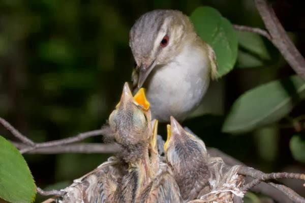 Types of baby birds - photo#10
