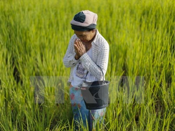 Kết quả hình ảnh cho nông nghiệp thái lan