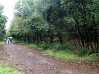 Caminant per la Pineda de Can Màrgens