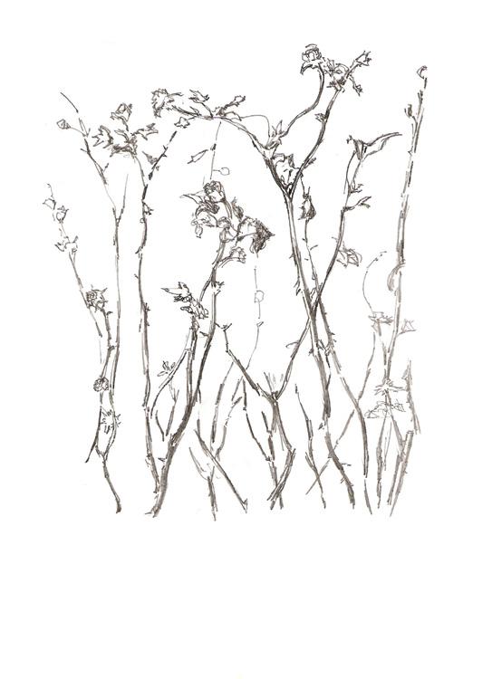 Mariano Espinosa Mundo vegetal I dibujos de plantas