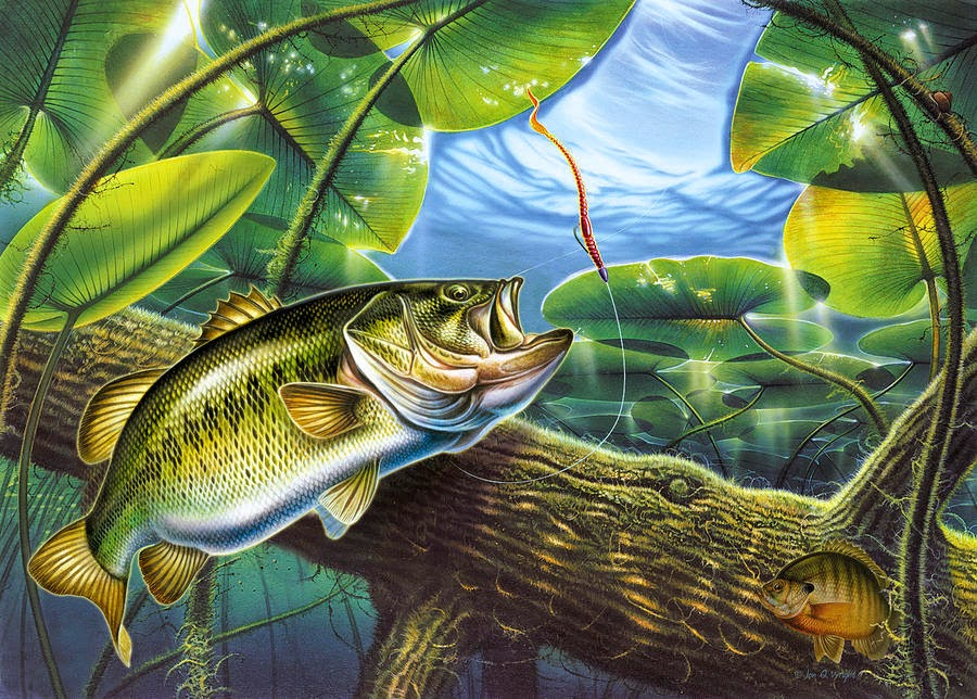 Fish r bass fishing wallpaper for Bass fish painting