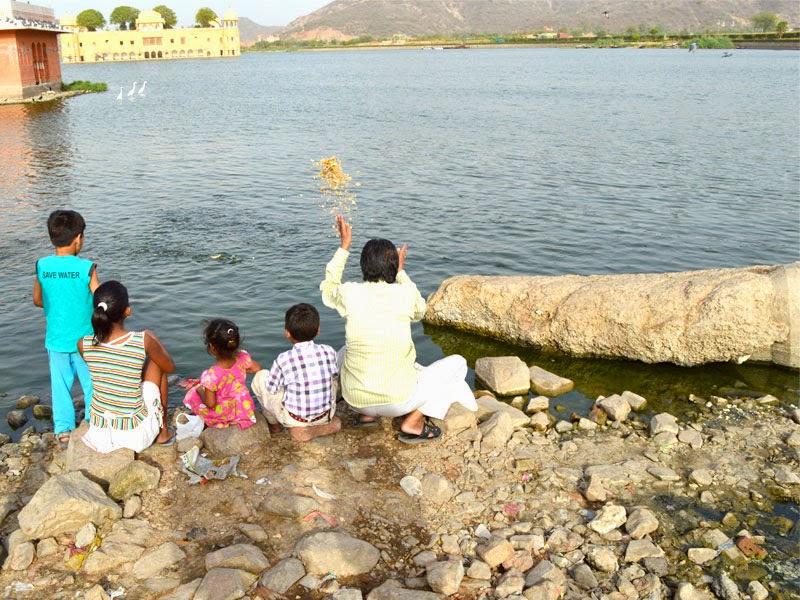 Fish feeding at Jal Mahal