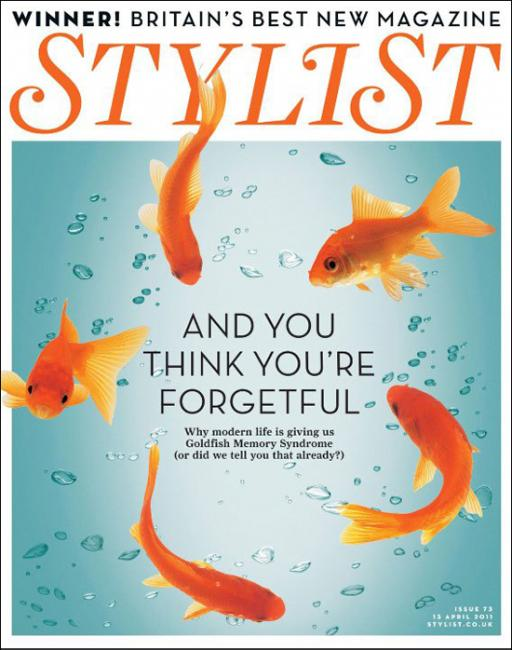 Stylist Goldfish Cover