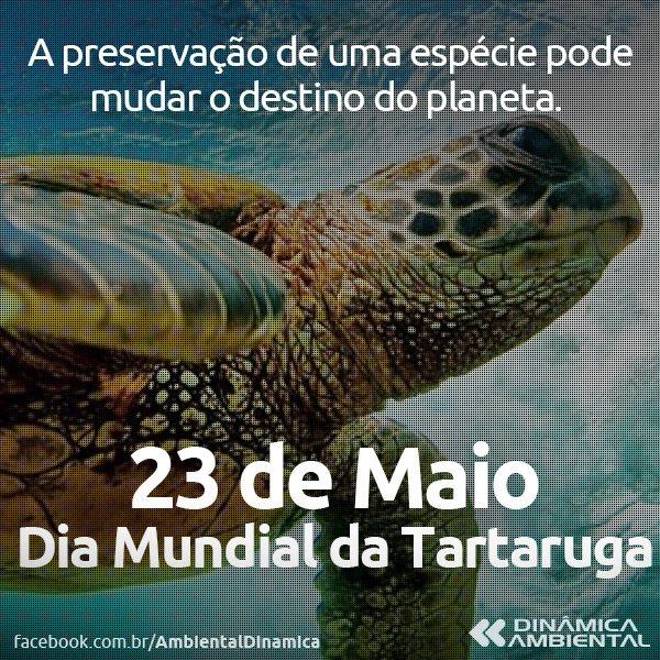 Resultado de imagem para dia da tartaruga