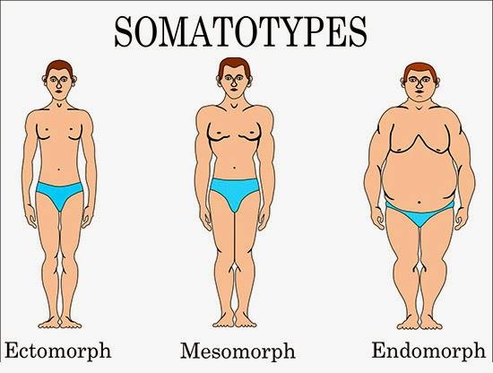 Ectomorfo, endomorfo ou mesomorfo, qual é o perfil de seu corpo?