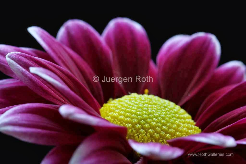 http://juergen-roth.artistwebsites.com/art/all/flower+fine+art/all