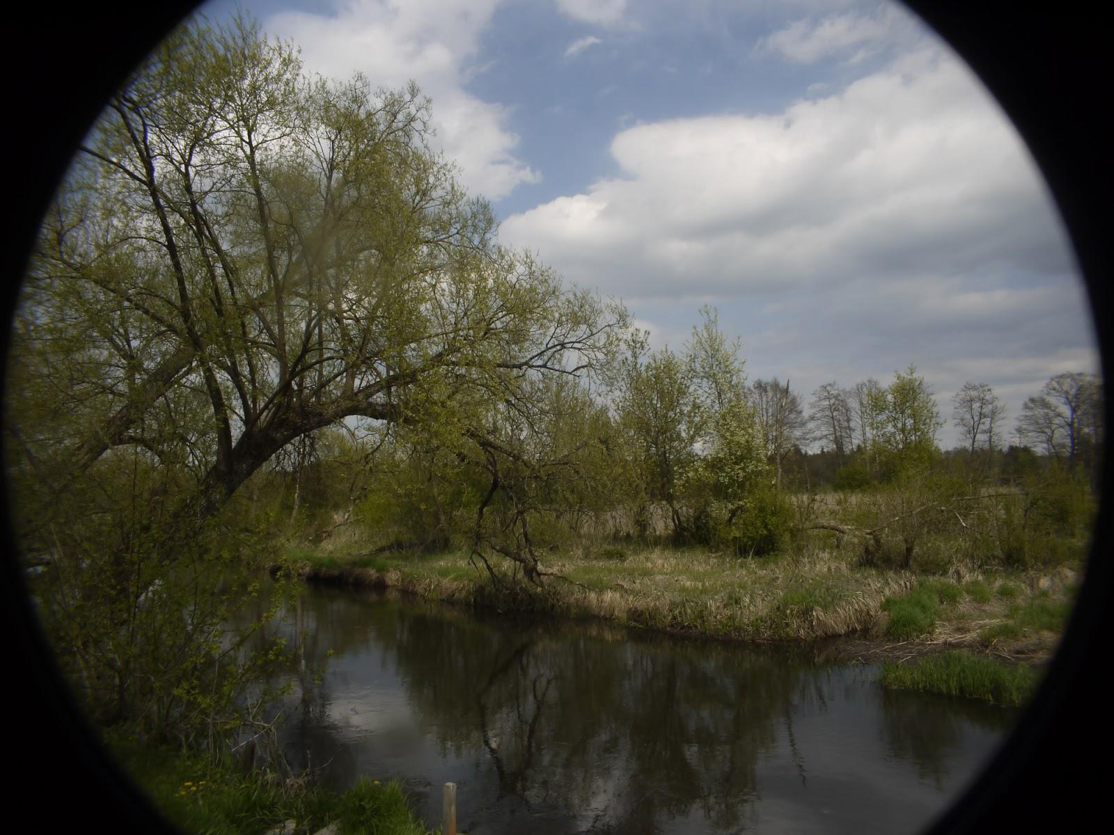 Cosmicar 12.5/1.9 @22 - landscape (full Micro Four Thirds sensor).
