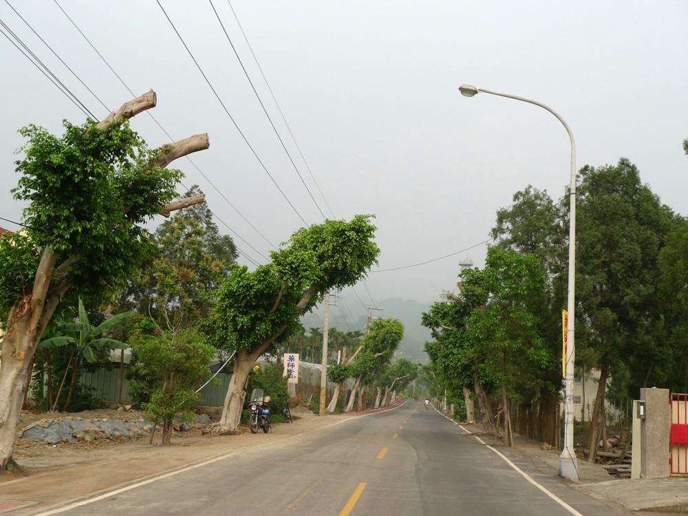 tree lined street in taiwan