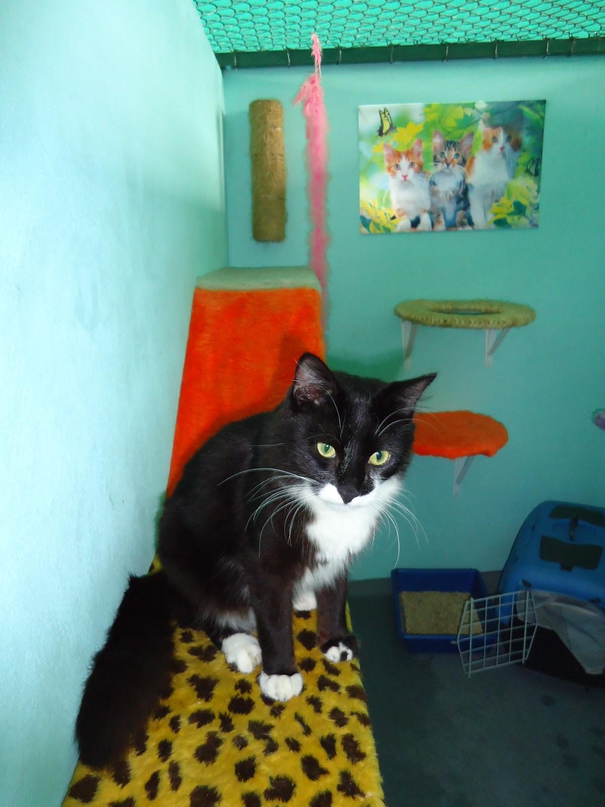 #CA2D01 Gato é Gente Boa!: Enriquecimento ambiental: Seu gato pode ser feliz  1468 Tela Janela Gatos