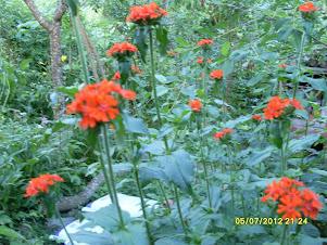 Puutarhapalvelu Tampere palveluksessanne e-mail: puutarhapalvelua@gmail.com