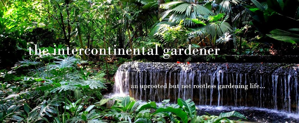 The Intercontinental Gardener