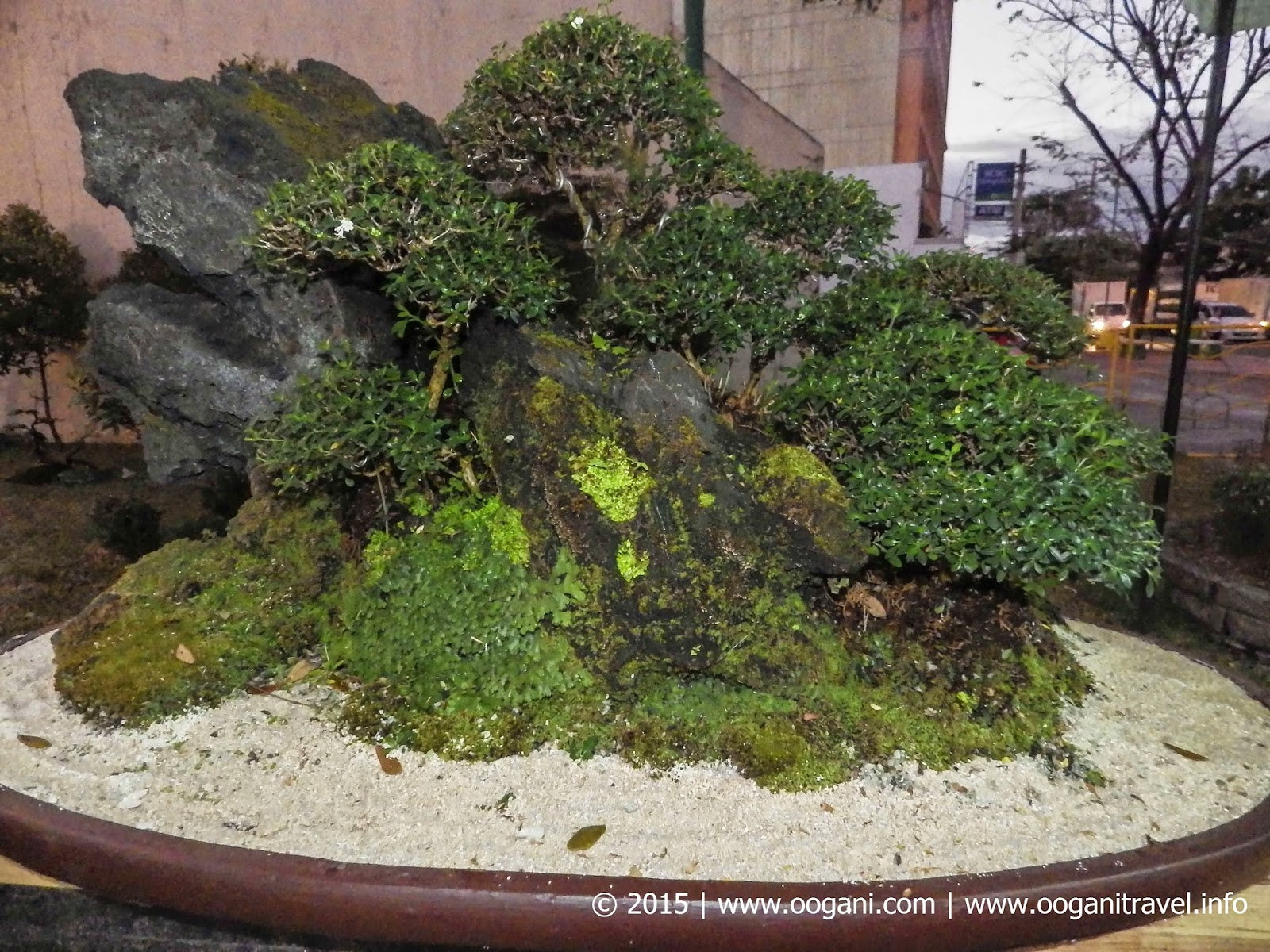 office bonsai. Marikina City Tourism Culture And The Arts Office This Year Art At Park \u201cTree Of Life\u201d, Bonsai Exhibits: Competitions Workshop.