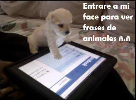 Imágenes tiernas by marimor36 on Pinterest Frases  - imagenes de animales tiernos con frases chistosas