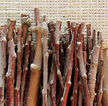 Brizel Apple Wood Chew Sticks