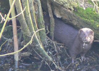 ملف كامل عن اجمل واروع الصور للحيوانات  المفترسة   حيوانات الغابة  445449968_59f4cd308e