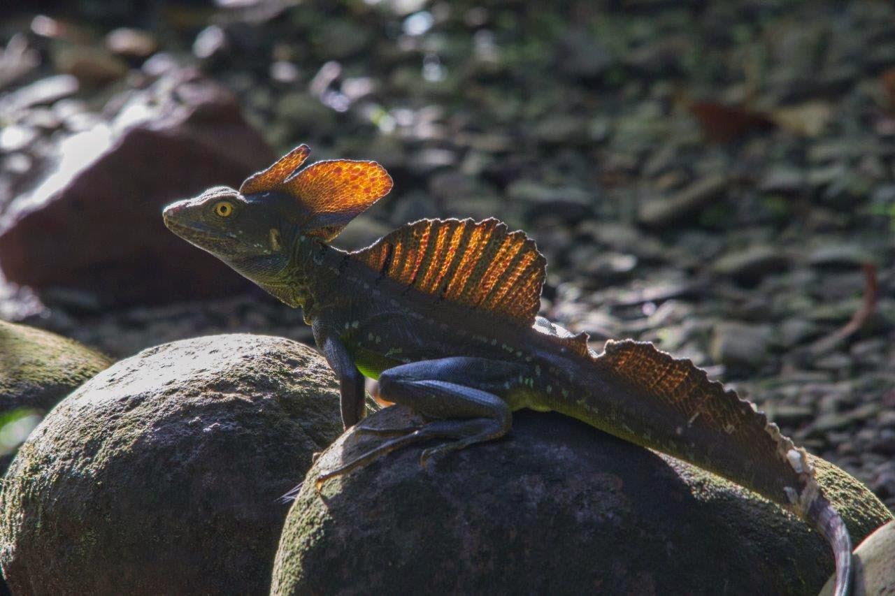 Natuur en reisblog Natuurpresentaties: december 2014