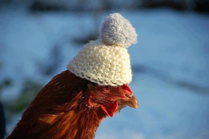 Unexpected farmer chickens jumpers