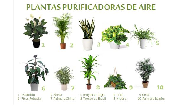 Diez de las plantas consideradas con mayor poder de purificación del