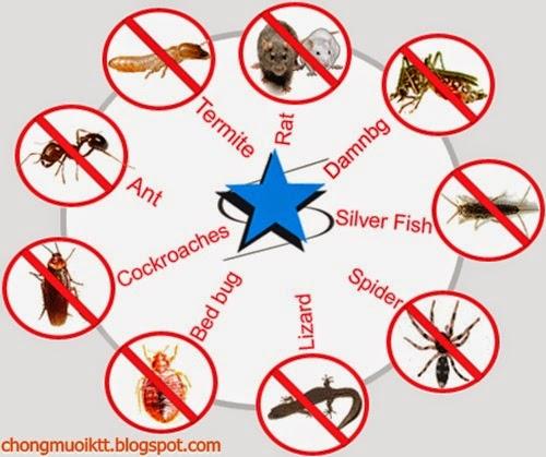 Giải pháp chống côn trùng hoàn hảo
