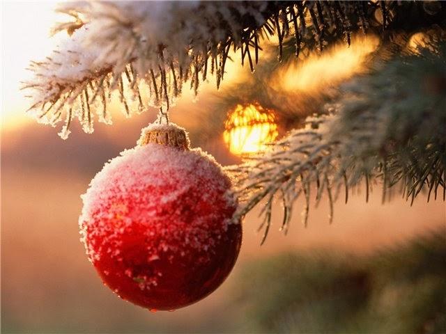 красный шар на живой елке