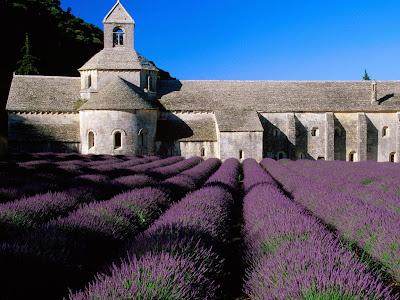 Wow! Cantiknya Padang Lavender!
