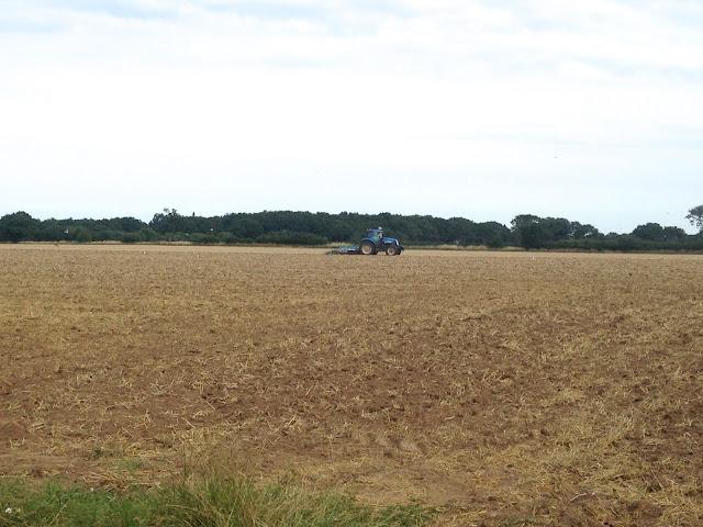 Harvest in Norfolk