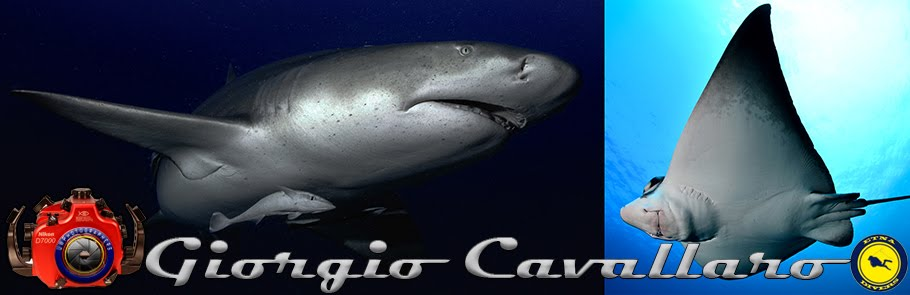 Giorgio Cavallaro