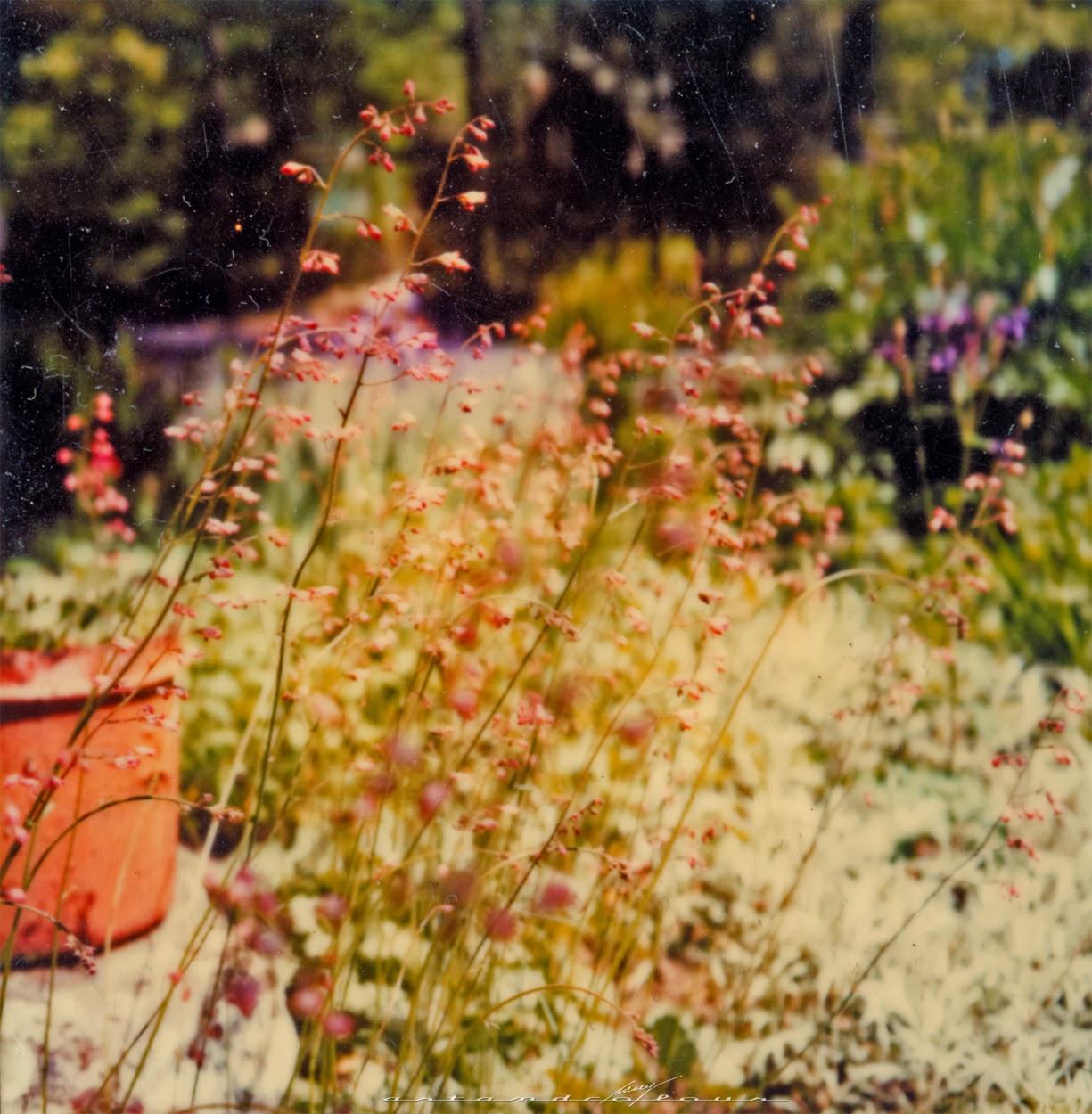 Field Of Flowers Vintage | www.imgkid.com - The Image Kid ...