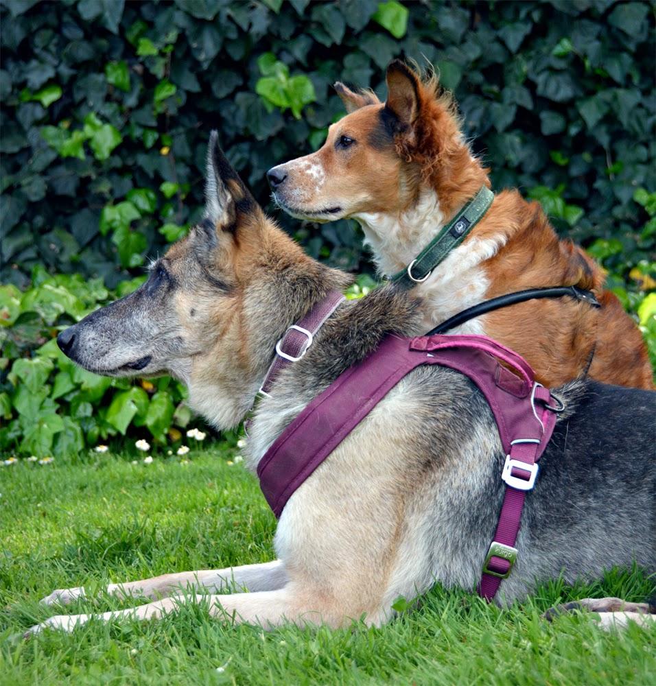 Planet Dog Cozy Hemp Adjustable Dog Harness, Blue, Small pics