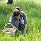 erbe buone a Treia