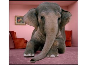 [Image: elephant-in-the-room.jpg]