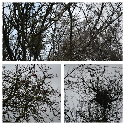 Apples, old mans beard and birds nest in winter